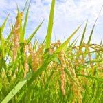 農業機械メーカーで健康促進ヨガ